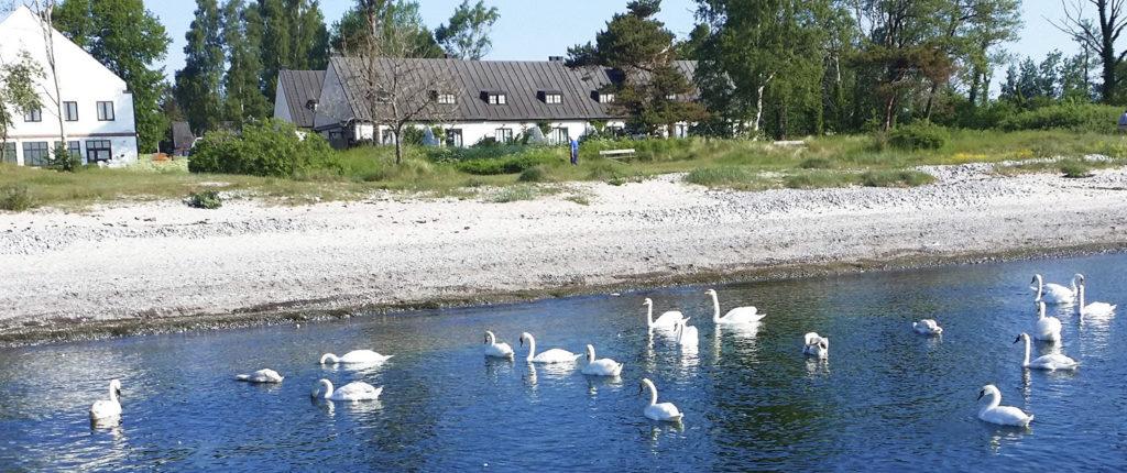Smygehus Havsbad - Golfpaket Skåne